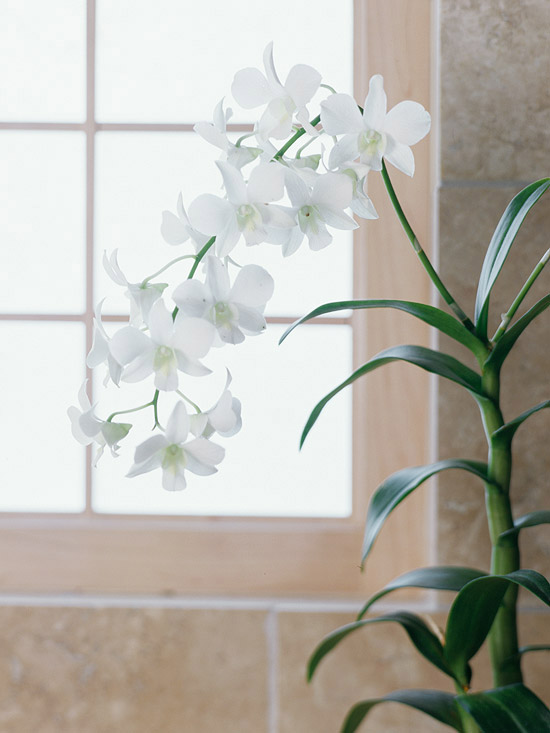 homie spiti fyta gia to mpanio orchidea 1